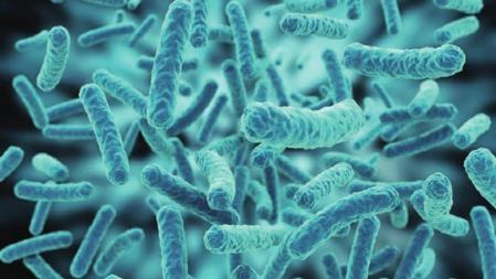 以电为食的细菌——别人吃饭,它们吃电