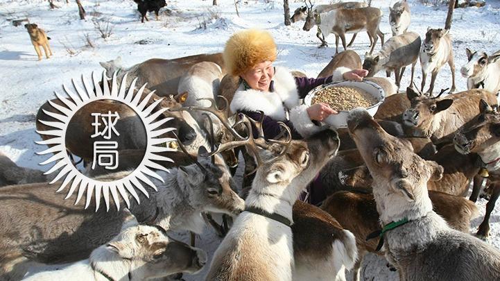 冬天來了,又到了東北人貓冬的季節