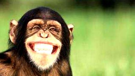 海滩上的凶杀案 —— 黑猩猩警长探案系列的头图