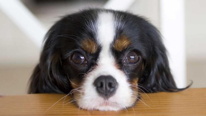 关于狂犬病的九个常见问题,你都知道答案吗?的头图
