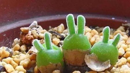 当植物长成动物的样子会是啥样?