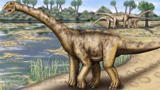恐龙足迹在贵州被发现,听说这次是蜥脚类家族