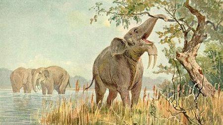 象鼻子是怎样变长长长长长长的?