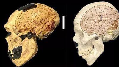 人类的大脑为什么这么大?科学家终于找到了答案