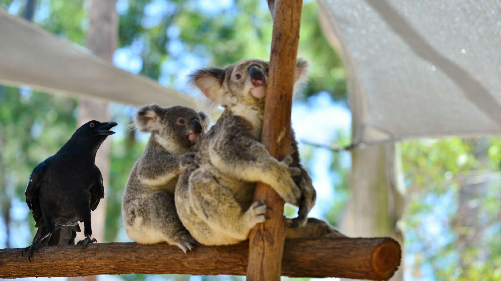 澳大利亚旅游攻略图片40