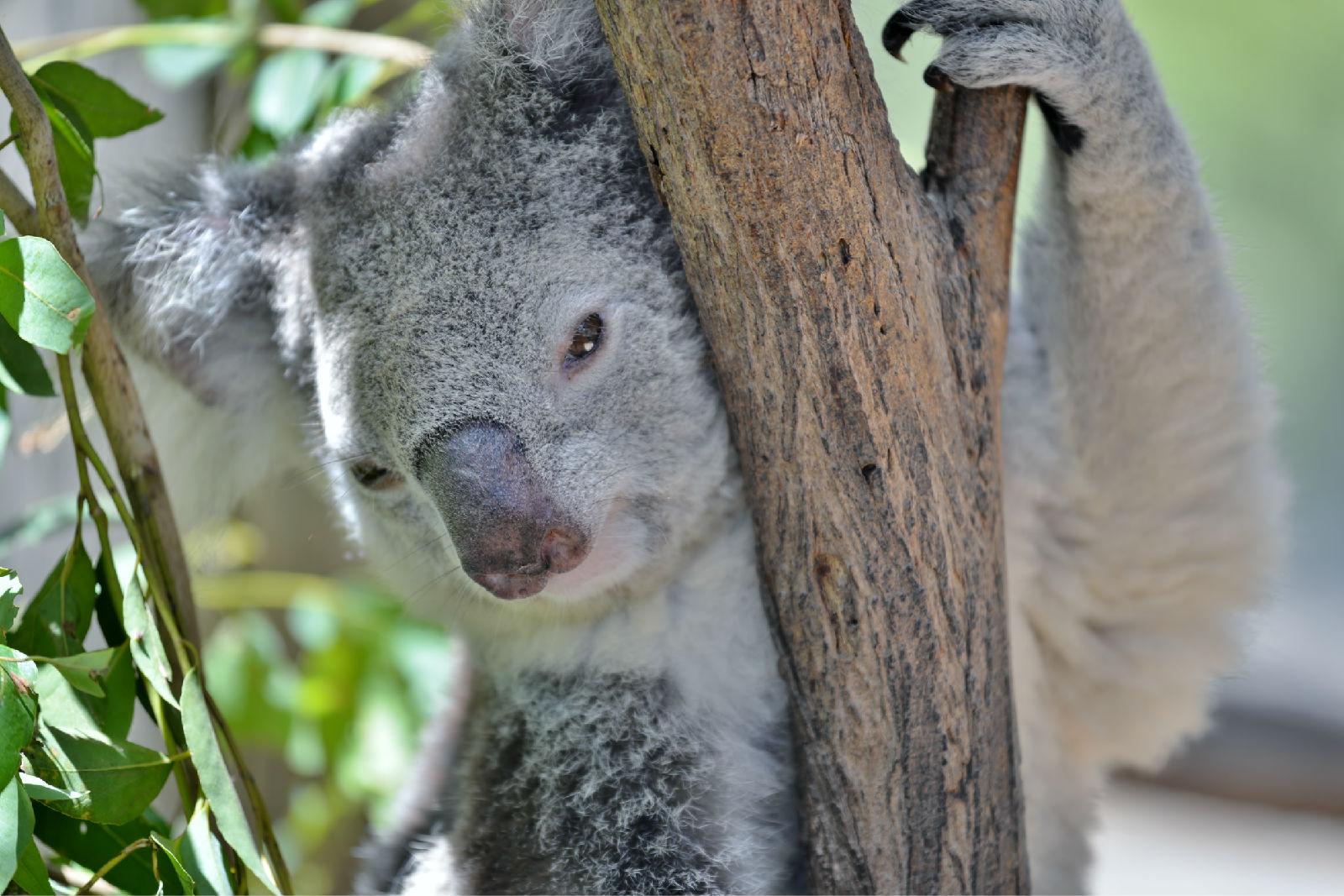 澳大利亚旅游攻略图片48