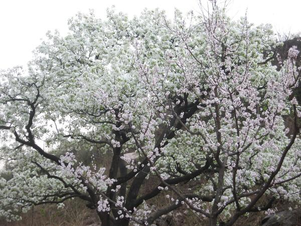 天津蓟县旅游攻略图片27