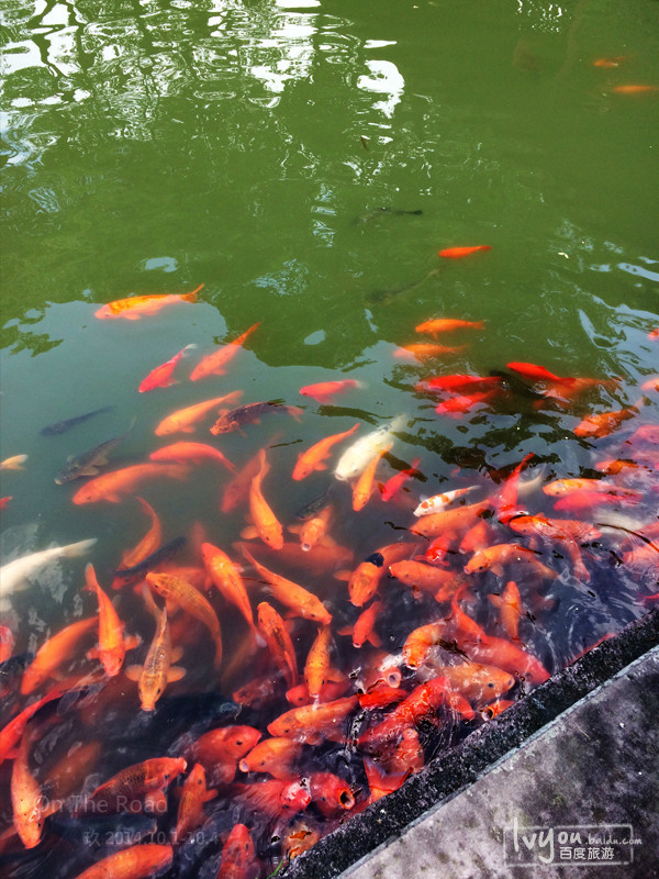壁紙 動物 風景 攝影 魚 魚類 桌面 600_800 豎版 豎屏 手機