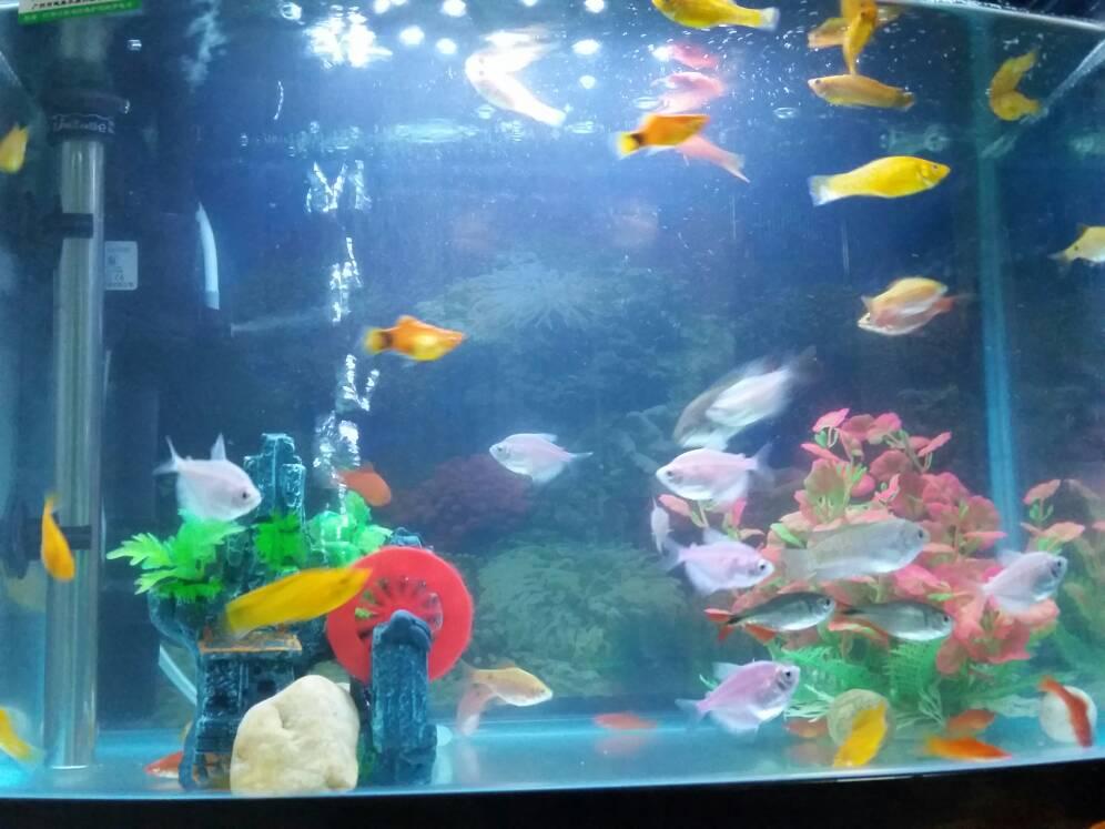清理鱼缸的鱼种类_鱼缸里这些鱼都是什么品种?~_百度知道