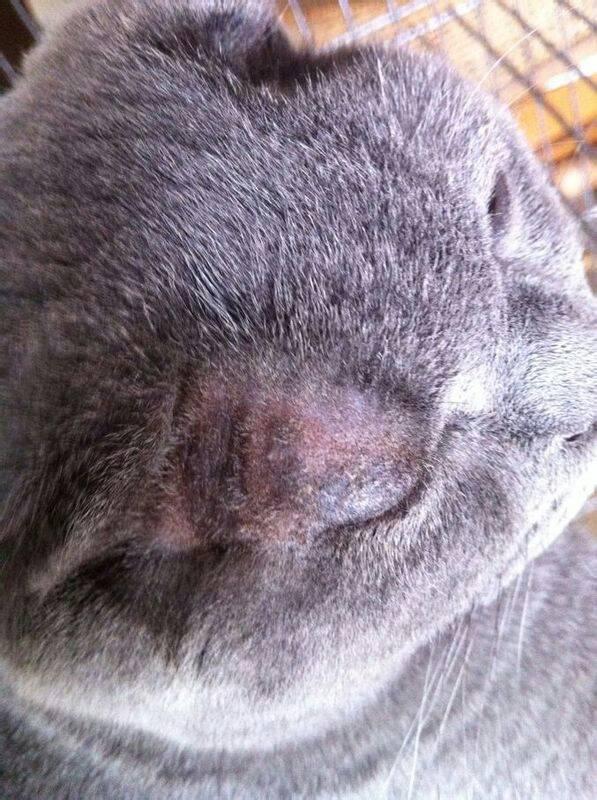 猫得螨虫的症状_我家养着一只猫和一只狗。猫先前有皮肤病,不慎传染给我家 ...