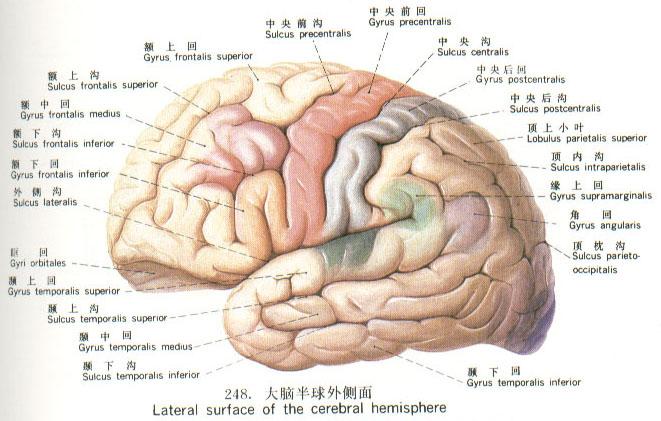 神奇的大脑图片