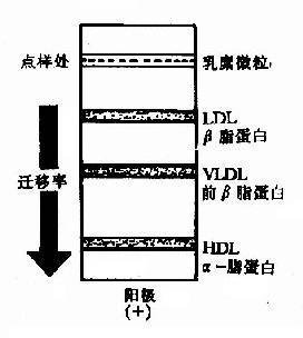 血清酶标本应选用