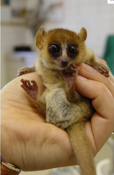哪里有动漫a片_《马达加斯加》里有只很动物 叫Mort,它是什么动物?哪里有它 ...
