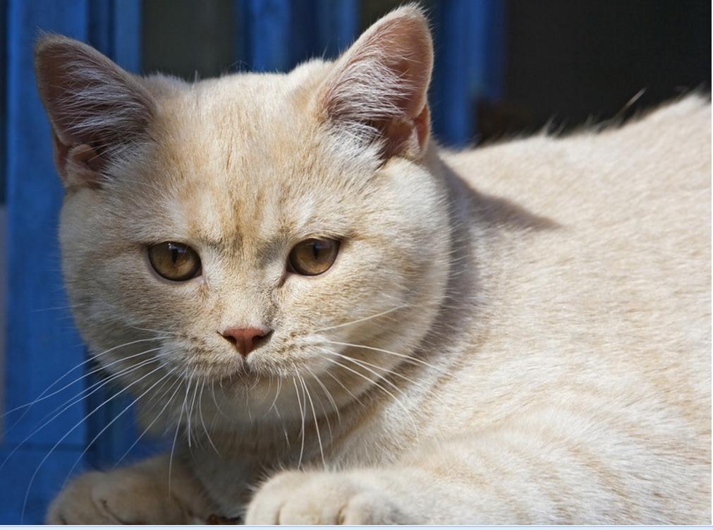 问猫什么成语_成语故事简笔画