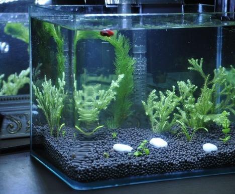 小型鱼缸适合养什么鱼_养孔雀鱼适合什么鱼缸_百度知道
