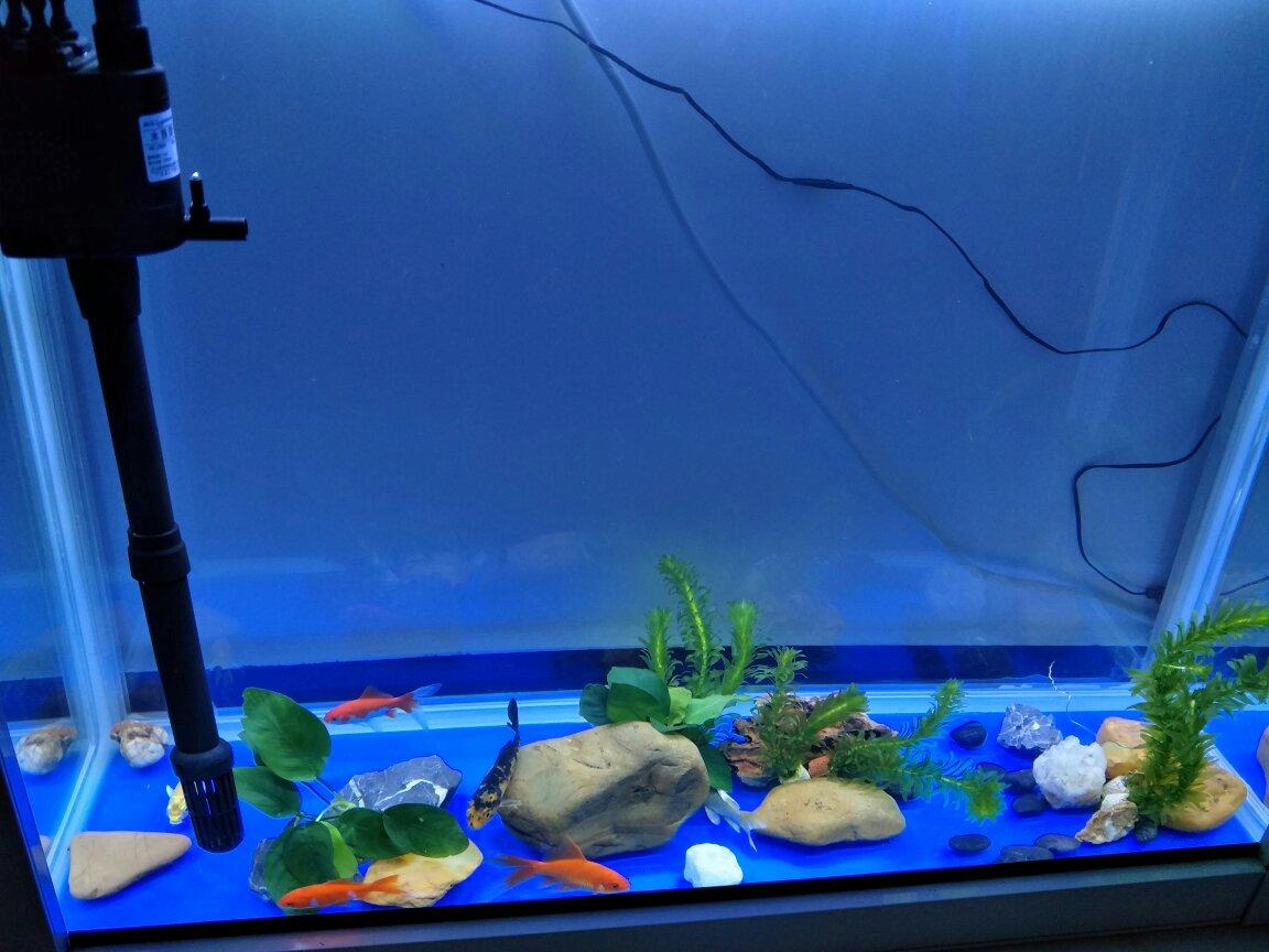 80 30 69的魚缸 養了六只小錦鯉 多久換一次水圖片
