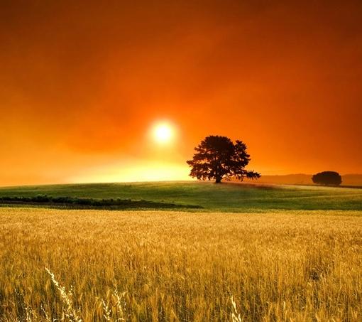 一掌风月宝鉴坐标图_急求一张单独长在绿色草原上的树的图片_百度知道