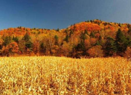 秋色诗词 形容秋色美景的诗句
