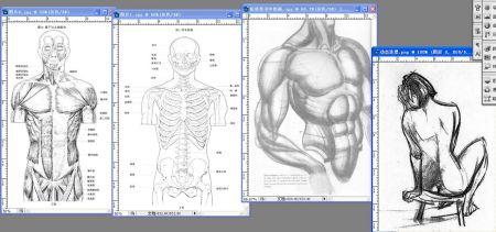 伯里曼肌肉_伯里曼主要是学习什么