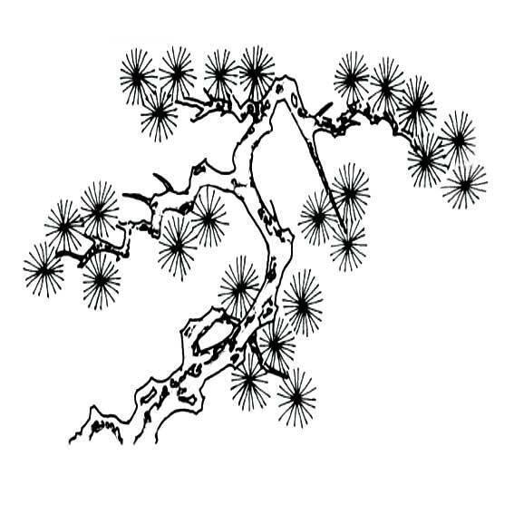 松树简笔画,要是图片
