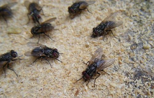 坚挺金苍蝇是什么_为什么用手打不到苍蝇,用苍蝇拍能打到_百度知道