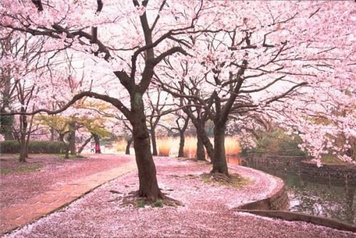 槎城诗词 四句描写自然风光的古诗词