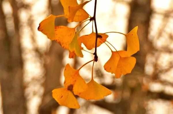 """""""黄黄的树叶,如……""""写句子"""