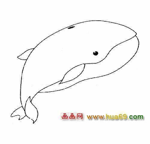 喷水的鲸的简笔画