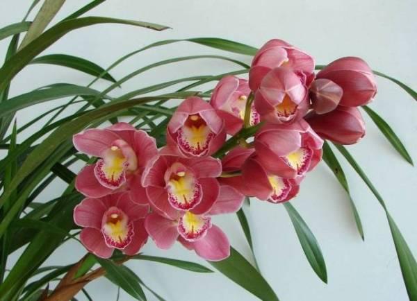 吟咏兰花的诗词 描写兰花诗句有哪些