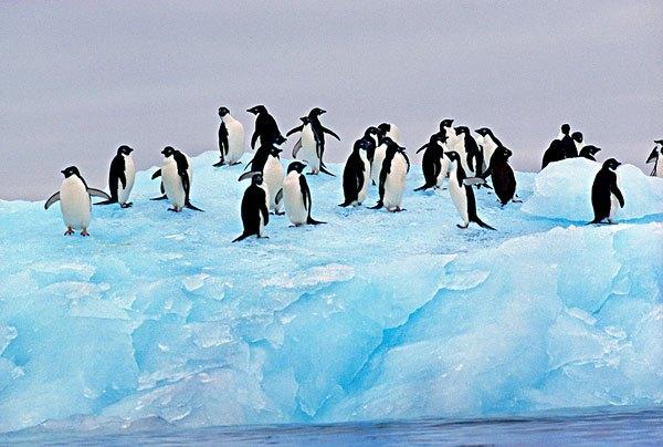 南极最冷的月份是_南极比较冷还是北极比较冷?_百度知道