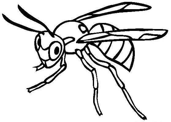 如何画黄蜂 黄蜂简笔画步骤