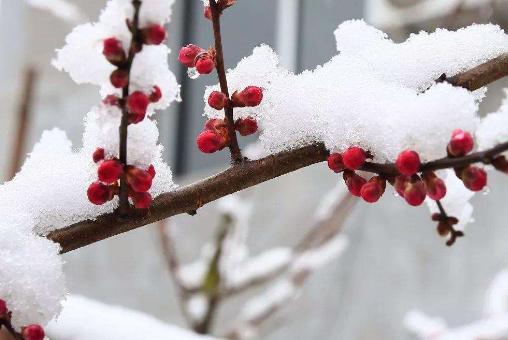 一首写冬天风景的诗词 一句描写冬天景色的古诗