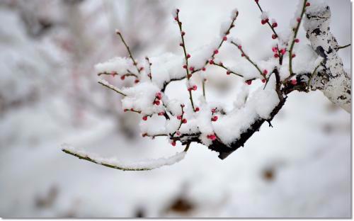 落雪长安的诗词诗词 描写落雪的诗句