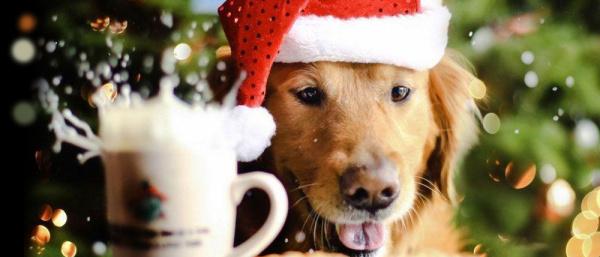 平安夜快乐和圣诞节快乐的英语是怎样翻译