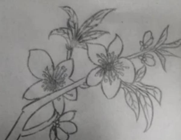 怎么画桃花 铅笔画 简笔画图片