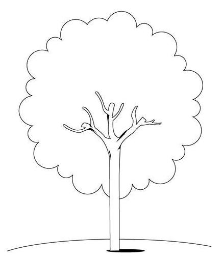 大树怎么画 简笔画大树的画法分享