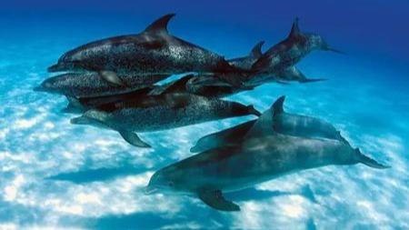 海洋哺乳动物是如何进行性生活的?