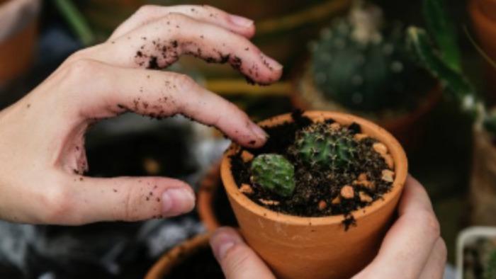 想让植物在炎热的夏季好好活下去?那就别多浇水的头图