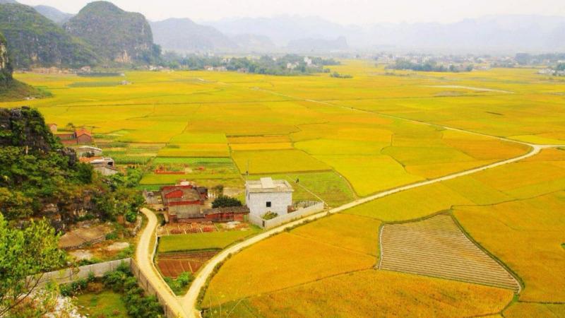 """从2018年起,农民有了新节日!1分钟了解""""中国农民丰收节""""的头图"""