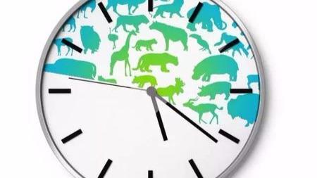 你知道有什么动物都灭绝了?连马都灭绝了!我们看不到野马了!