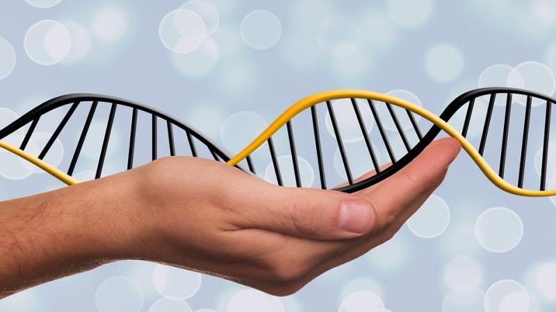 导致肿瘤发生的原因或是基因组的不稳定性!