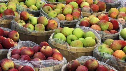 早上吃金苹果,晚上吃毒苹果,苹果真不能晚上吃吗?