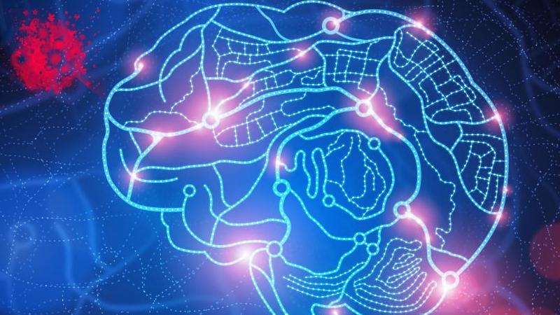 大脑是如何区分安全和威胁的?的头图