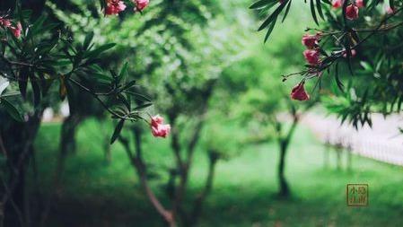 小隐的素言素语丨生命里,那些不期而遇的欢欣