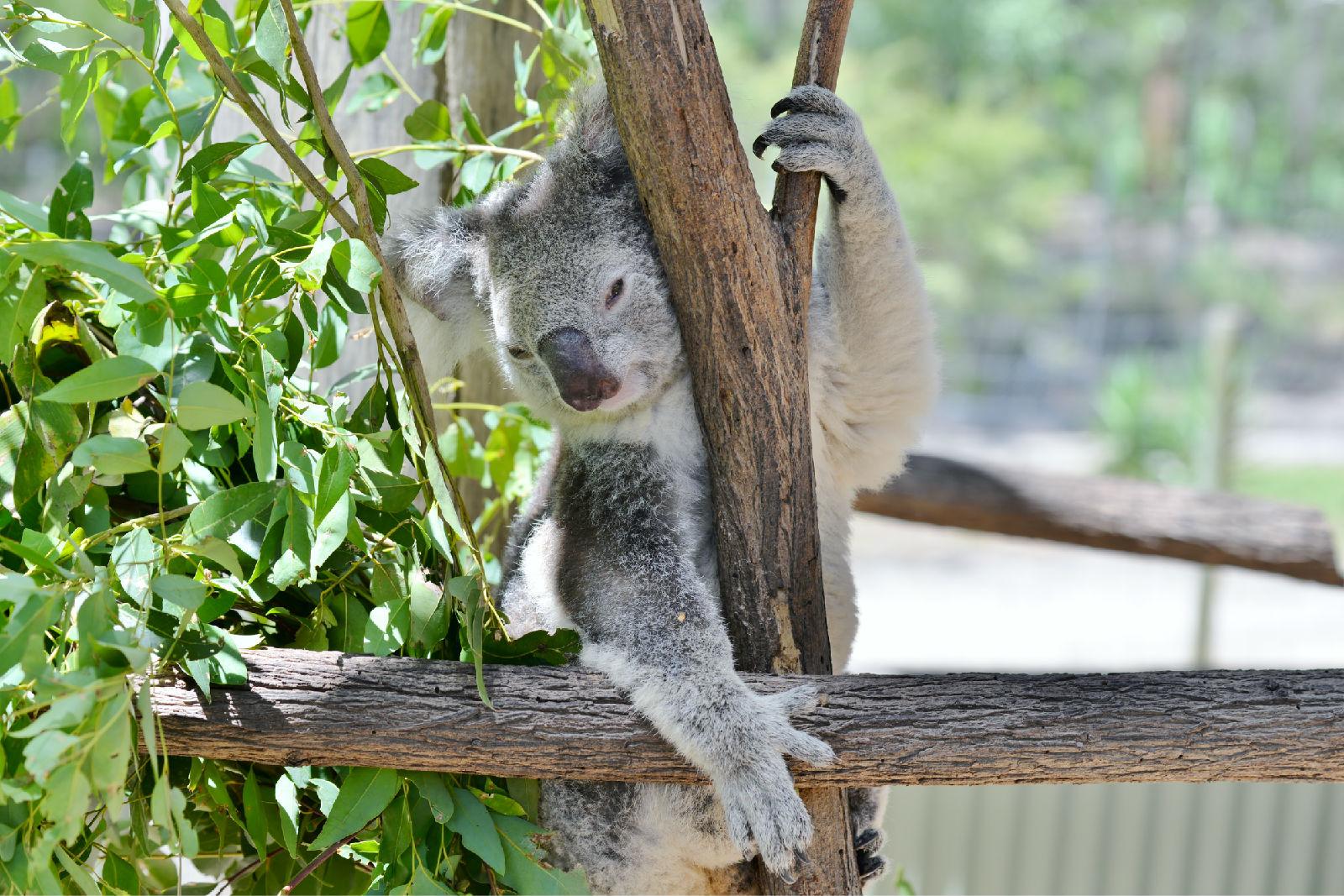 澳大利亚旅游攻略图片47