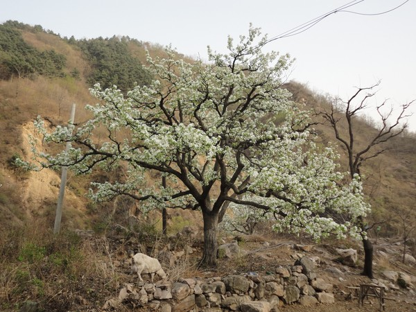 天津蓟县旅游攻略图片54