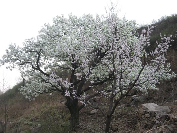 天津蓟县旅游攻略图片26
