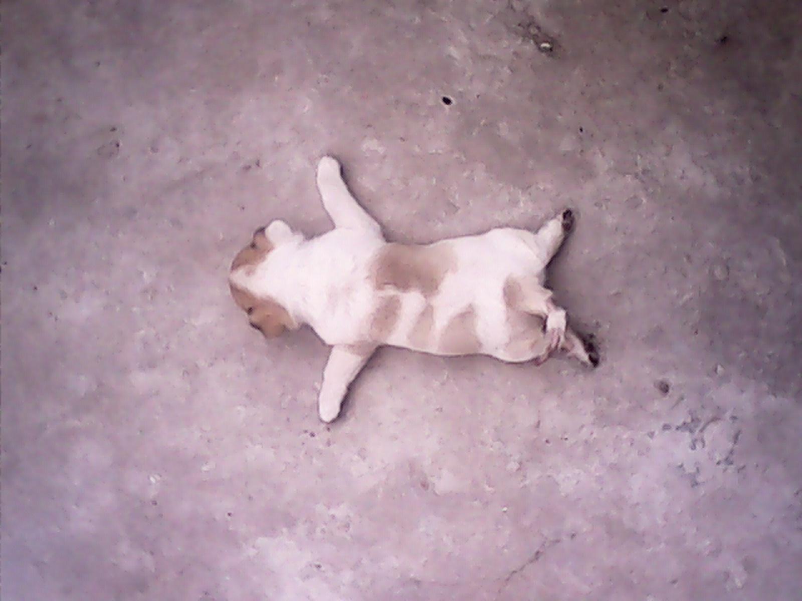 狗狗为什么趴在地上走 狗狗走着走着往地上坐