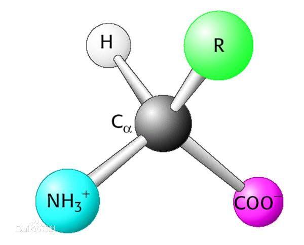 d丙氨酸和l丙氨酸的区别_左旋氨基酸构成蛋白质——生物老师的奇葩问题_百度知道