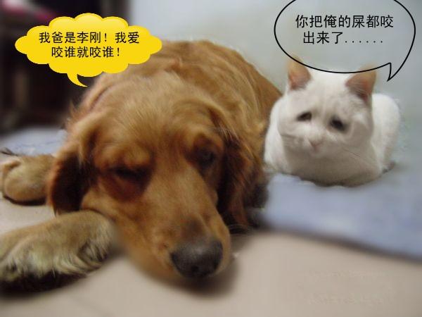 小色狗和猫交配_我的小猫被狗咬了